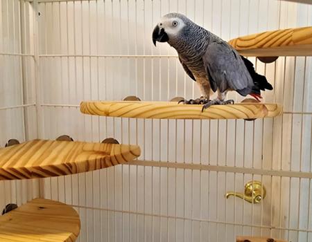 Flat Perch