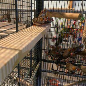 Finches Long Flat Perch Shelf