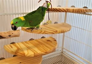 Large Flat Perch for Macaws